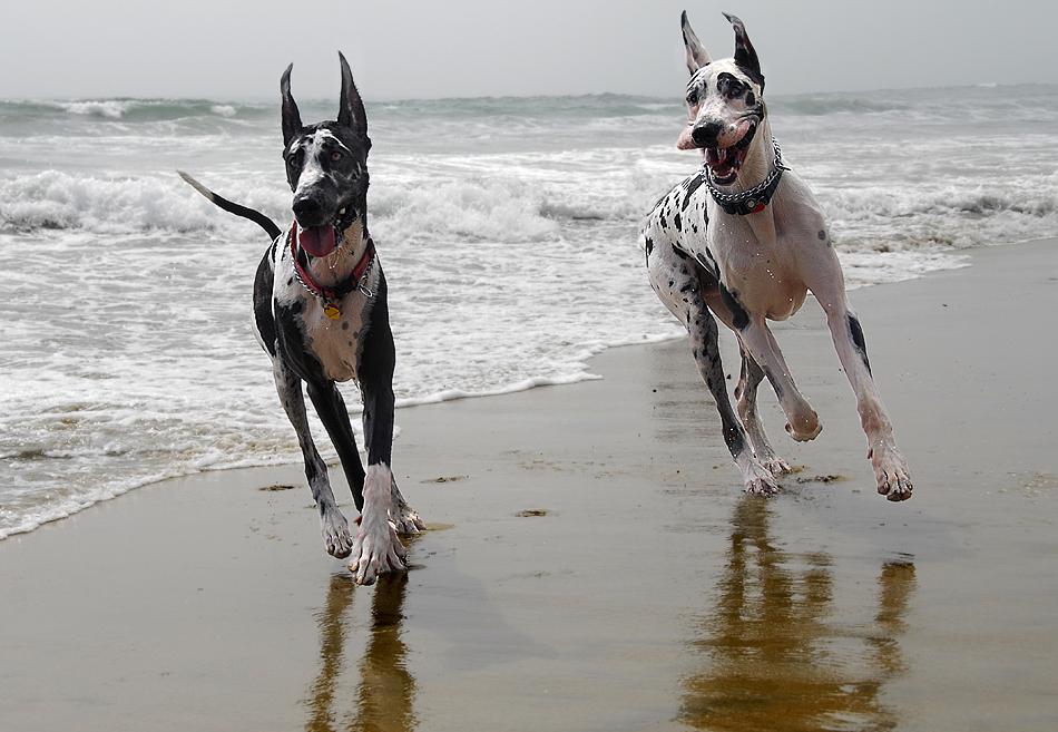 Породы собак  Petsikru