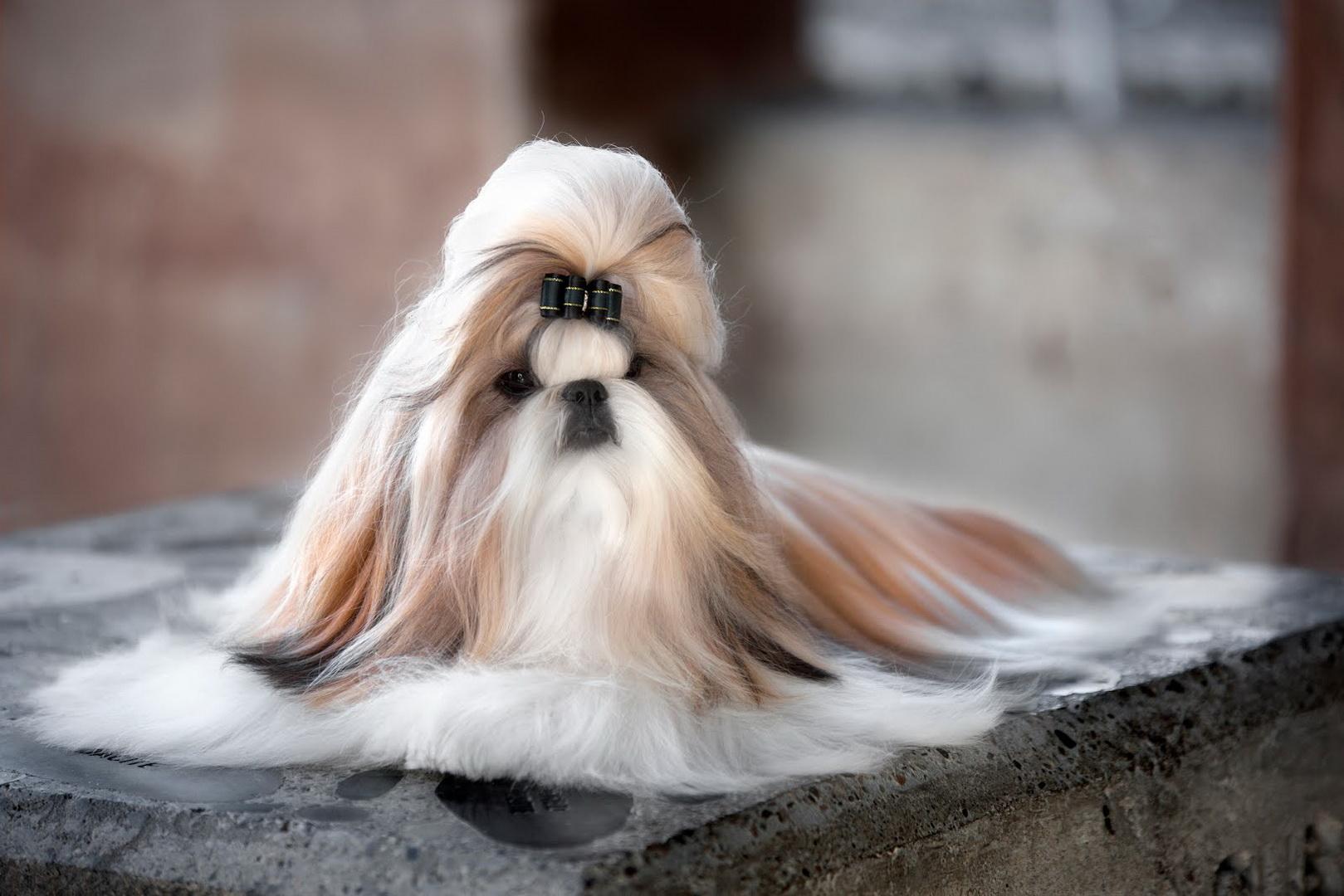 China Dog Show