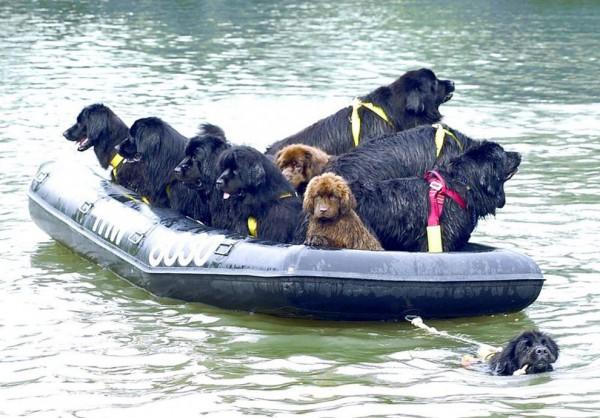 Спасательный отряд водолазов
