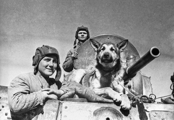 Немецкая овчарка в Великой Отечественной войне