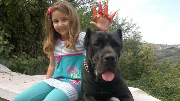 Кане-корсо с ребенком