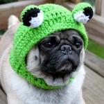 Мопс в костюме лягушки