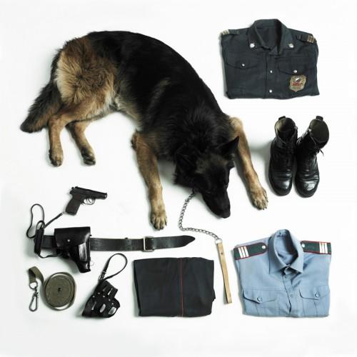 Немецкая овчарка это служебная собака