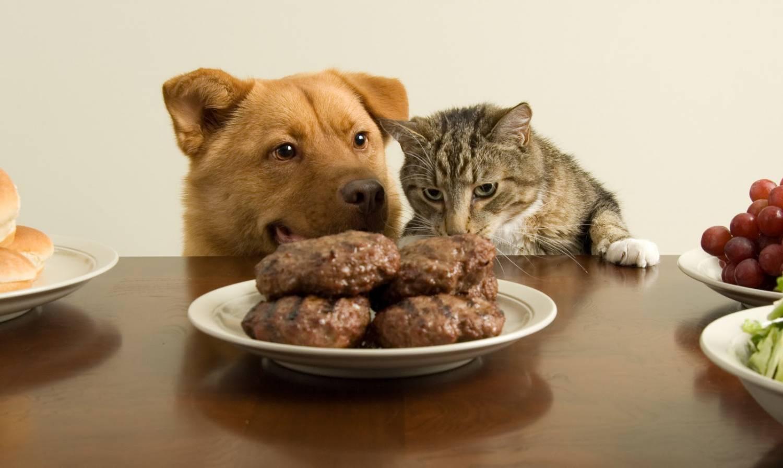 Пес, кот и котлеты