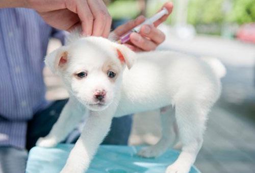 Первая прививка щенку