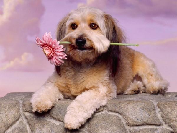 Пес с цветком