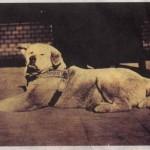 Преданная собака Хатико