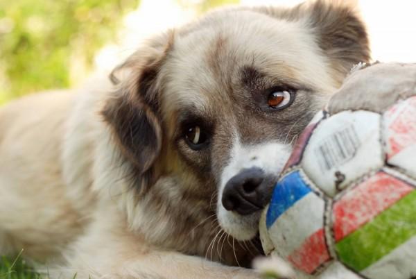 Пес с мячиком