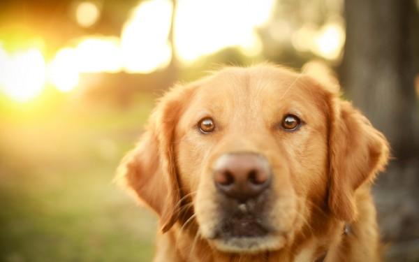 Собака на закате