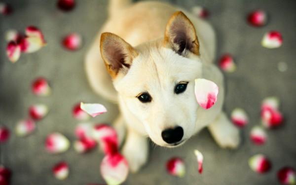Собака в лепестках роз