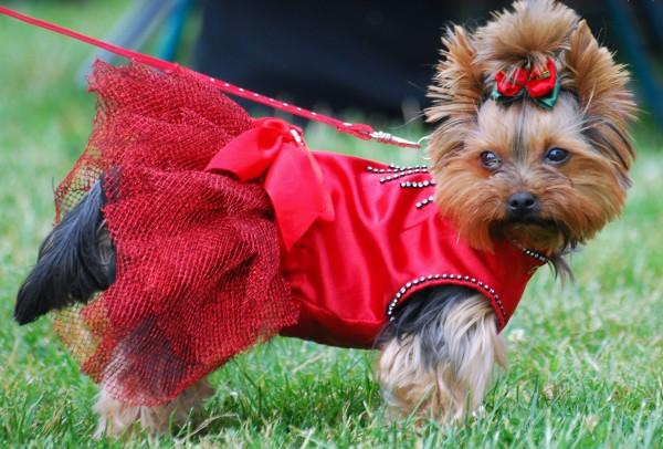 Собака принцесса