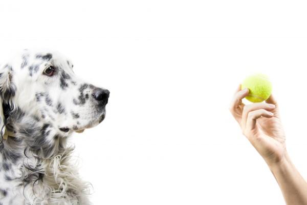 Собака и мячик