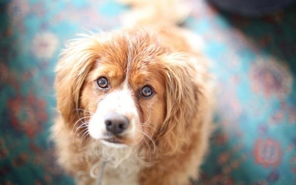 Внимательная собака