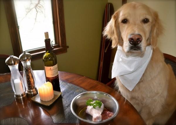 Собака готовится отужинать