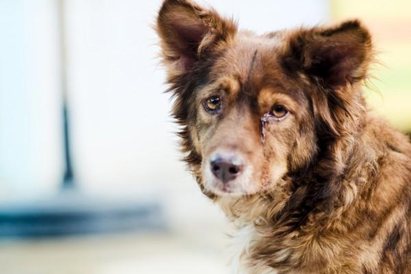 Серьезный взгляд собаки