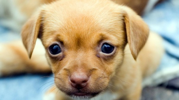 Маленький грустный щенок