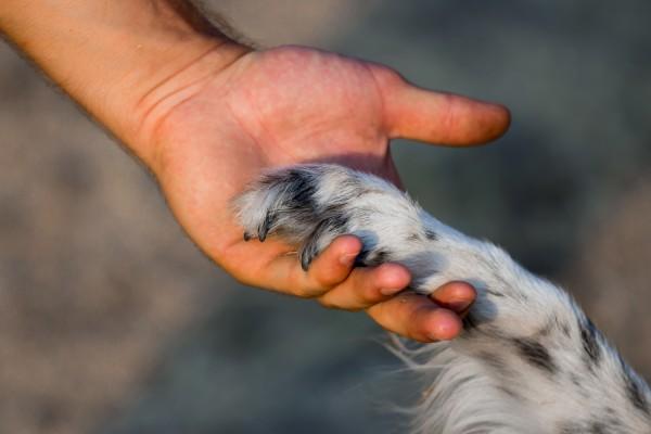 Собака протягивает лапу человеку