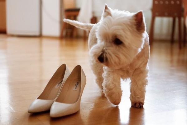 Собака и туфли