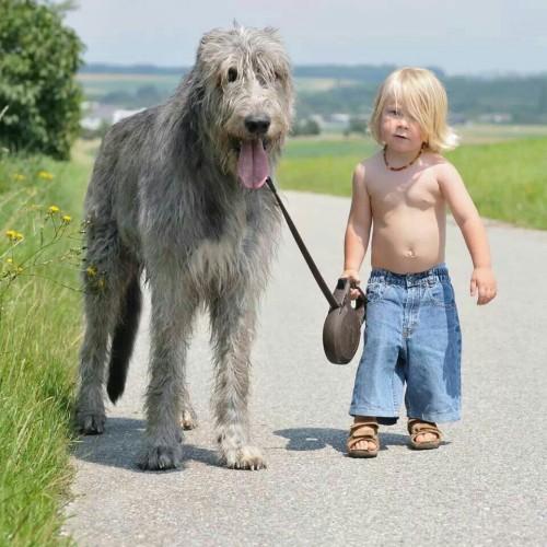 Ирландский волкодав и мальчик