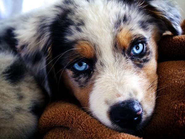 аллергия на собак симптомы и лечение
