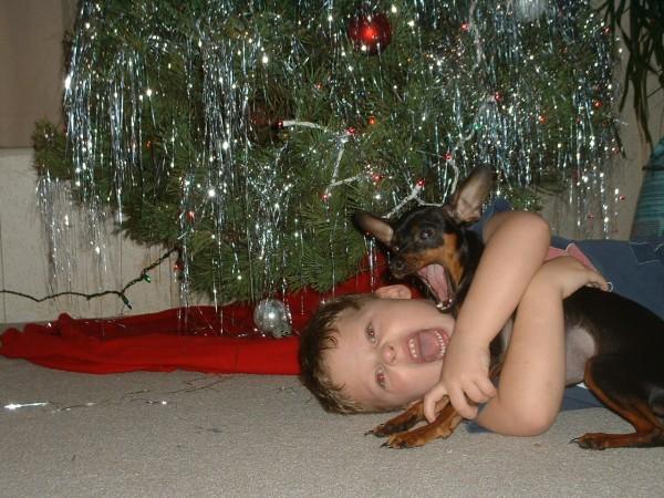 Цвернпинчер с ребенком под новогодней елкой