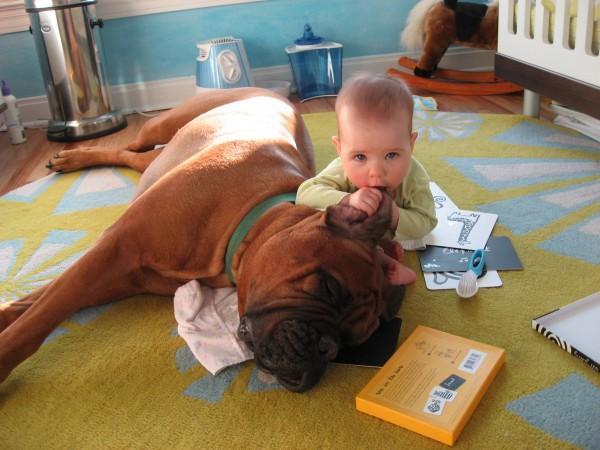 Бульмастиф с ребенком