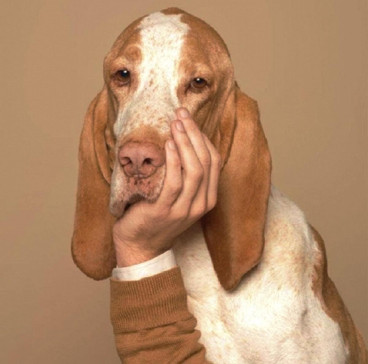задумчивый пес