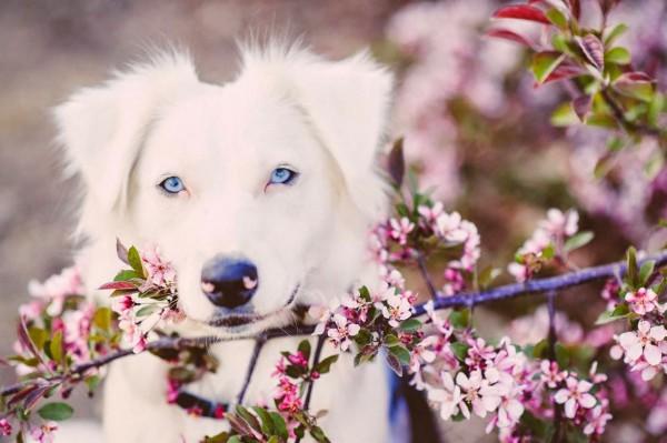 собака в цветущем саду