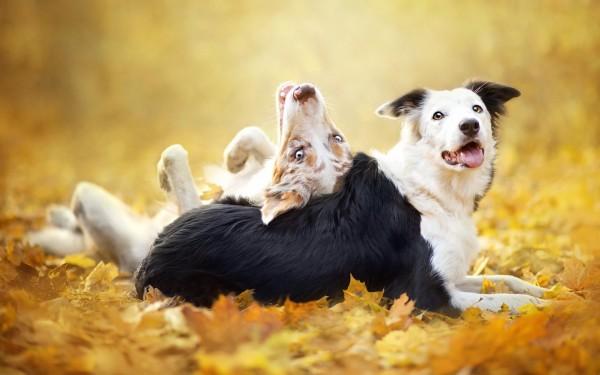 аллергия у щенка чем кормить