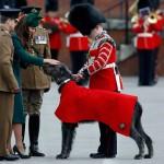 Ирландский волкодав в подарок Кейт Мидлтон от принца Уильяма
