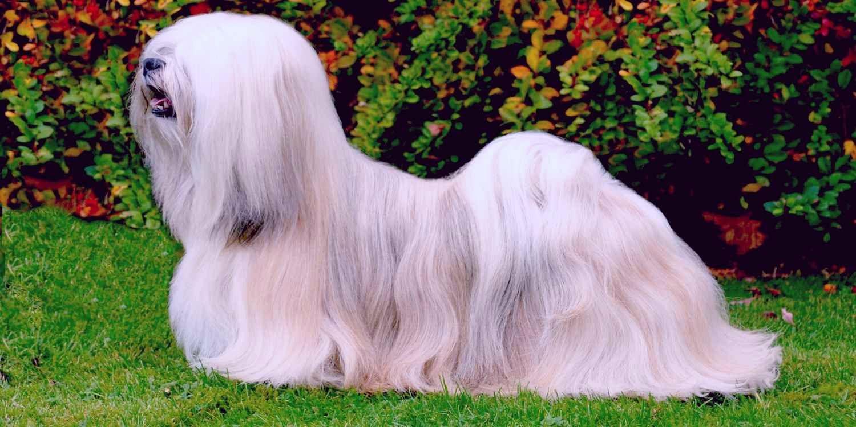 полная порода собак с фото