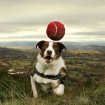Бордер-колли ловит мячик