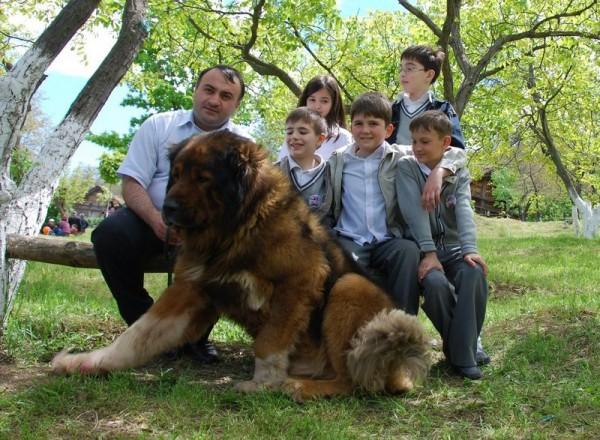 Кавказская овчарка с детьми