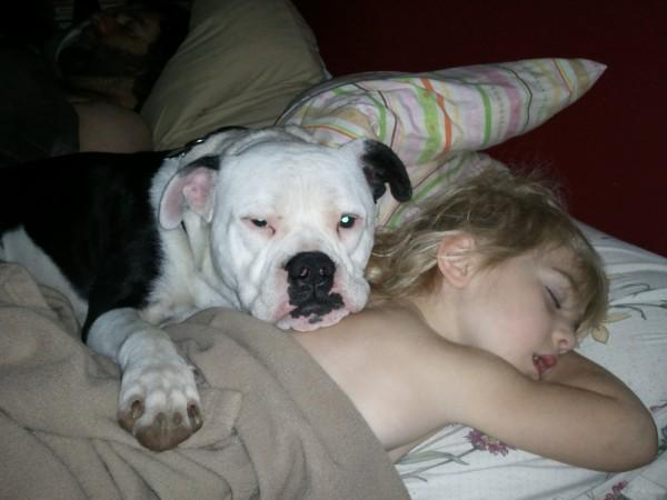 Американский бульдог спит в обнимку с ребенком