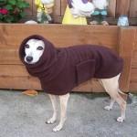 Левретка в свитере