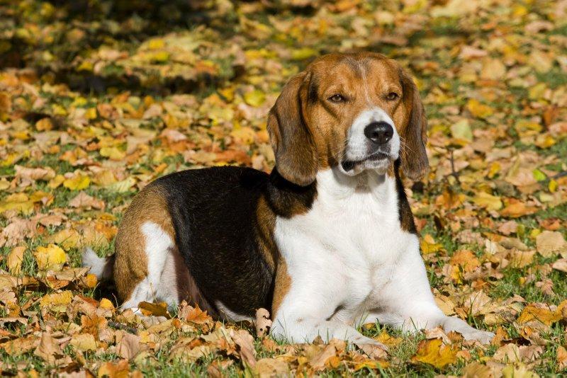 эстонка фото породы собака
