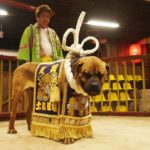 Традиционные бои Тоса-ину в Японии