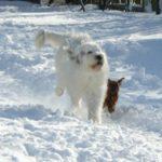 Южнорусская овчарка играет с маленькой собакой