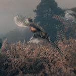 Английский спрингер-спаниель на охоте