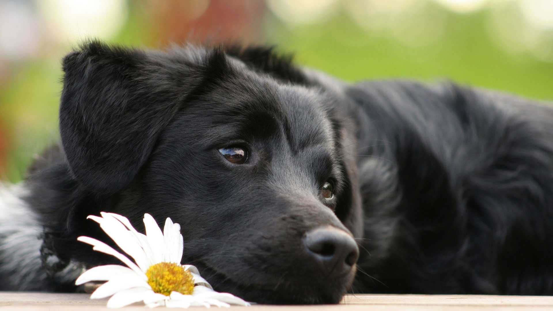 собачки фото красивые