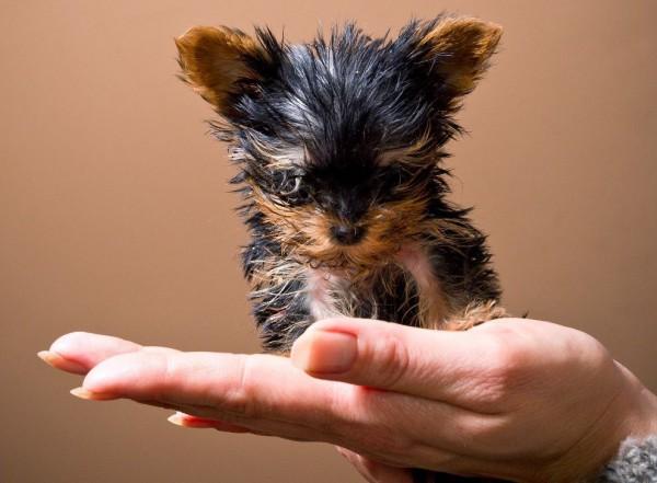 милые маленькие породы собак