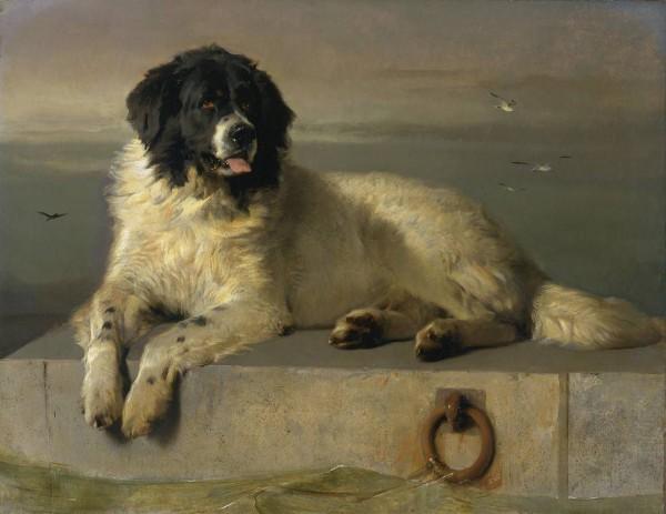 Sir Edwin H Landseer. Distinguished Member of the Humane Society (Newfoundland). 1838