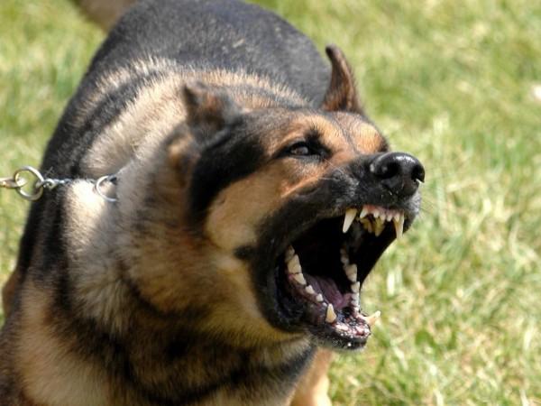 какие бывают злые собаки