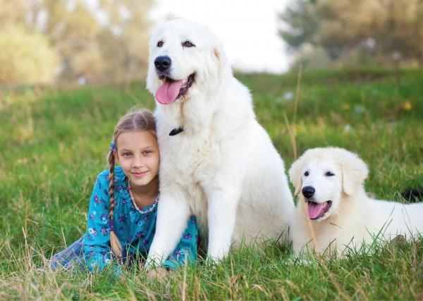 Мареммо-абруццкая овчарка с ребенком