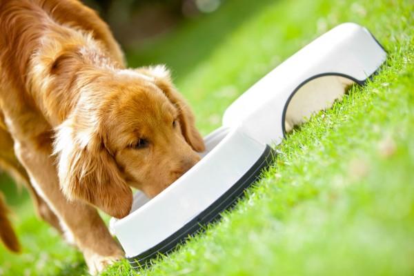 Собака ест
