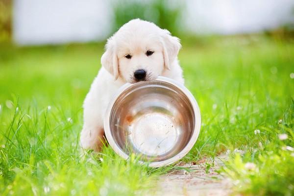 Чем кормить щенка: возраст 2 месяца