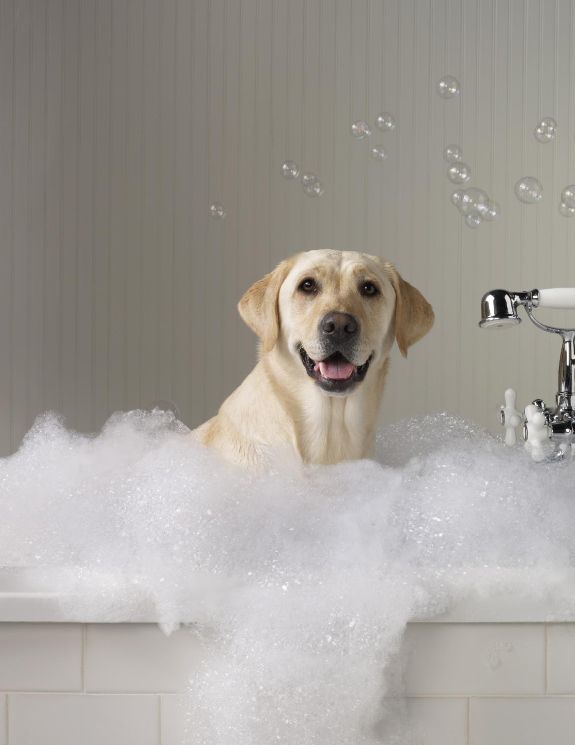 Как правильно помыть собаку?