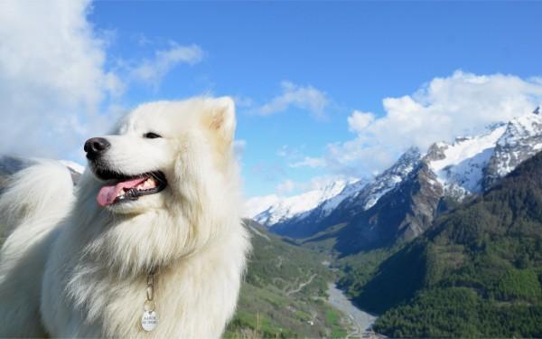 Самоед в горах