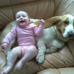 Бассет-хаунд с ребенком