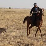 Охотник на лошади с Салюки